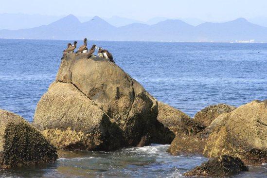 Arquipélago dos currais - Pontal Do Sul
